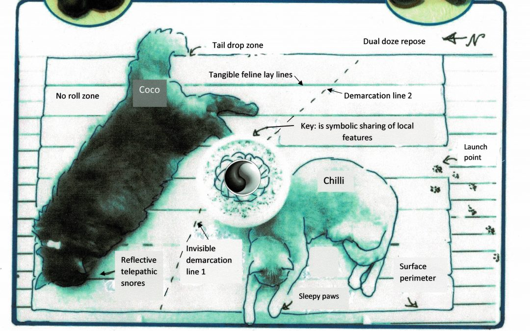 'The Facts of the Cat Nap – In a Map. A Prose Poem.' By Wendi Bradshaw